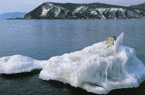 Подборка фильмов и сериалов о защите окружающей среды
